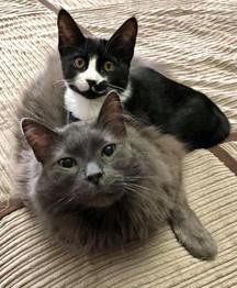 Royal and friend 1.jpg