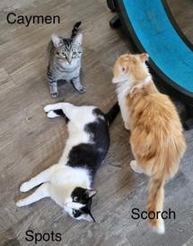 Cayment Scorch Spots 02.jpg