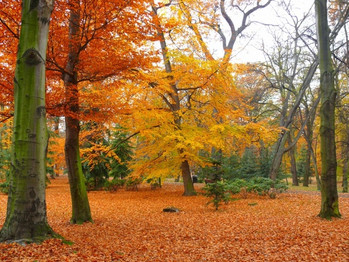 park_autumn_garden_216882.jpg