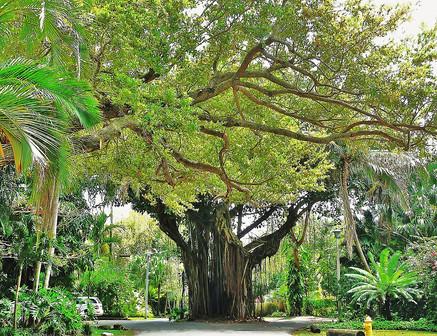 Coconut Grove #4.jpg