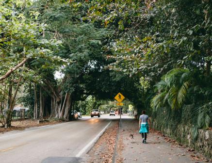 Coconut Grove #10.jpg