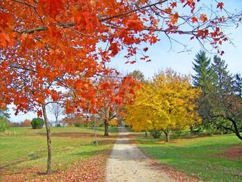 path_in_autumn_trees_196246.jpg