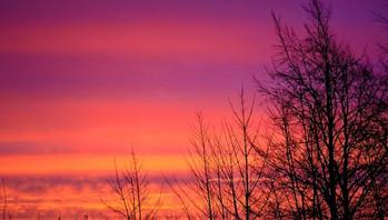 sunrise_and_trees_202282.jpg