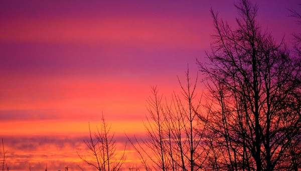 sunrise_and_trees_202282.jpg
