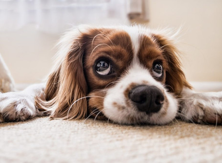 Fear-Free Vet Visits for Dogs