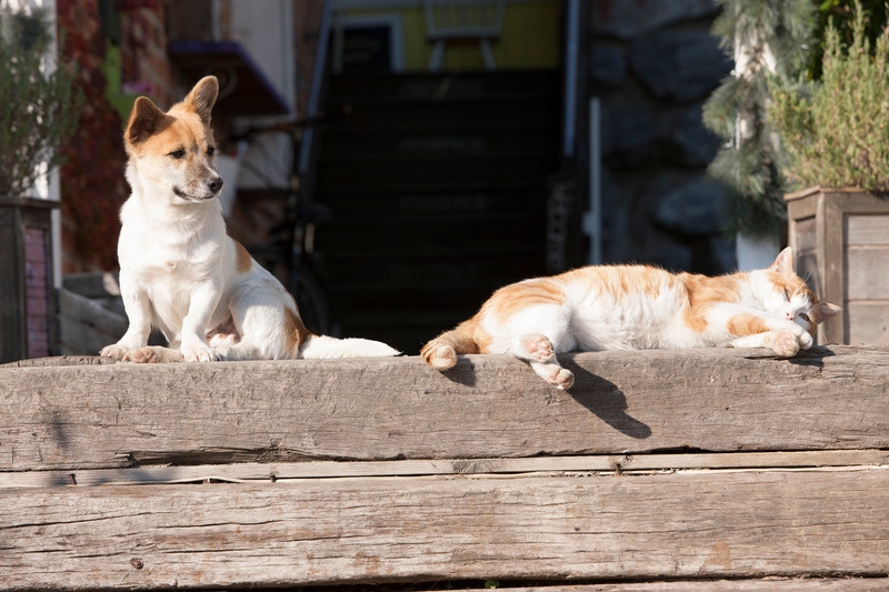 dog and cat lounging on a wood plank outdoors
