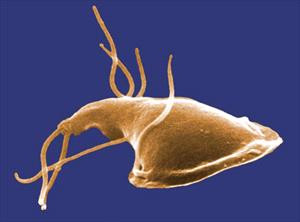 So your pet has Giardia...