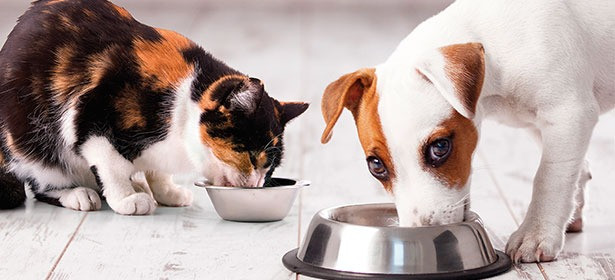 dog and cat eat out of metal bowls