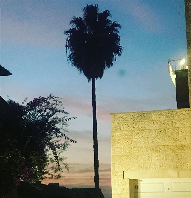 Evening #jerusalemsunset #palms #jerusal
