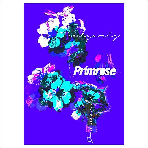 Primrose Blue - Fine Art Print