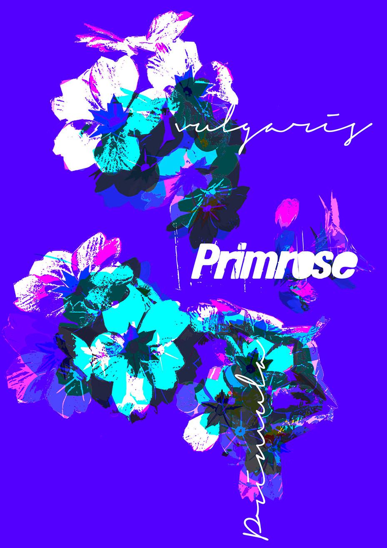 Primrose - Blue