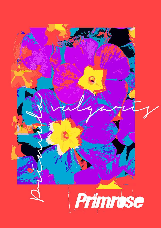 Primrose - Red