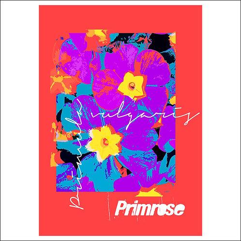 Primrose Red - Fine Art Print