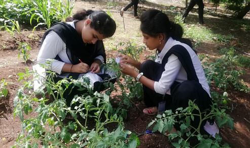 Botany Practicals