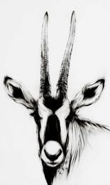 05-Artiodactyla-13종의-우제류-Charcoal,-conte