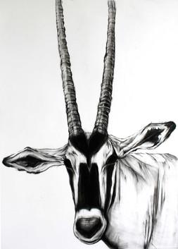 12-우제류-Artiodactyla--50cm-x-72cm--Charco