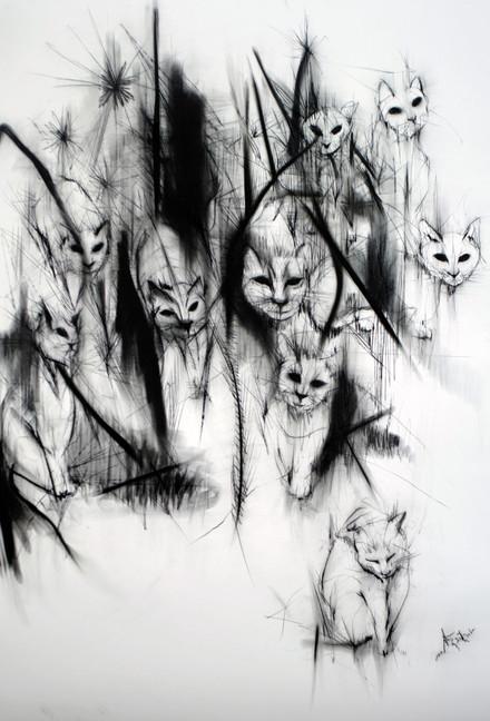 The stray cats
