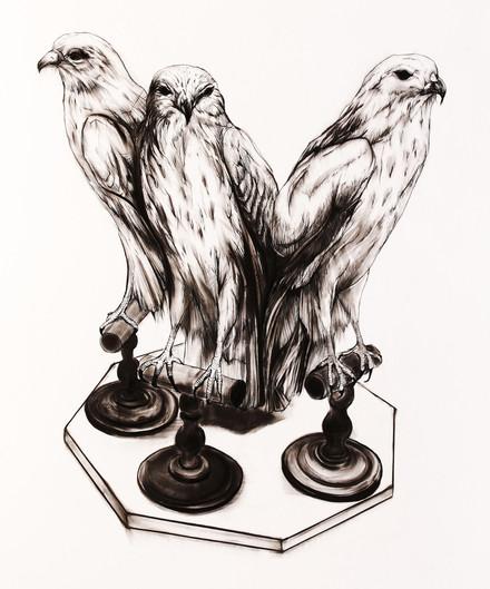 Three hawks