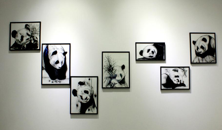 Panda Series _ Installation view