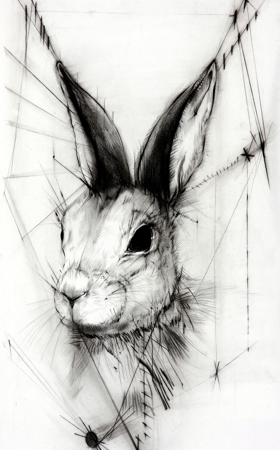 Deaf rabbit