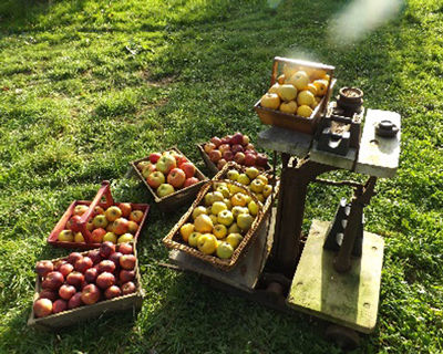 Farrs Field Orchard.jpg