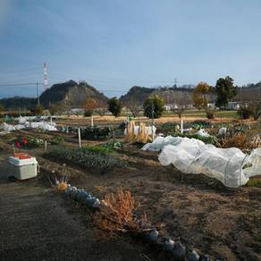 農業を始めます!