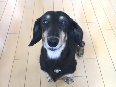 高齢でペットを飼い続けることができない、次のペットが飼いたくても飼えない、そんなお悩みに応えるためDogHuggyさんに話を聞きました。