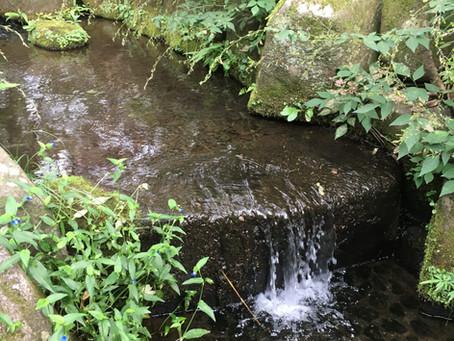 桜台公園の「せせらぎ」で子どもたちが水遊びできるようにしたい!