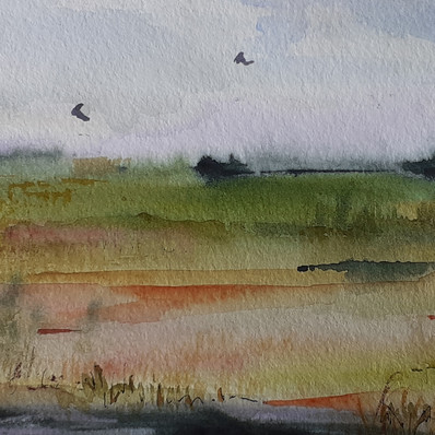 Reed Marshes