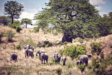 Baobab Tree by ErnstHeusser
