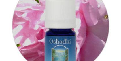 Rosa - Óleo Essencial Orgânico