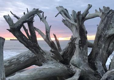 drift wood at the beach