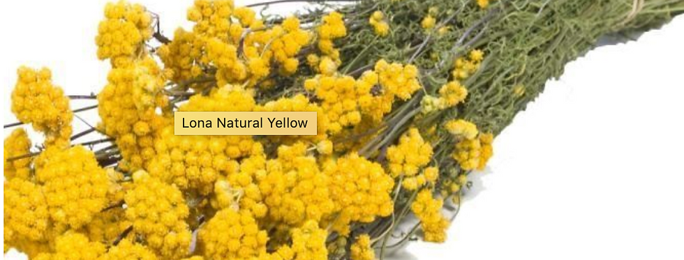 Lona Natural Yellow (Preserved, per bunch)