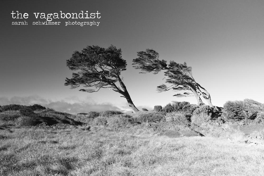 Bandera Trees