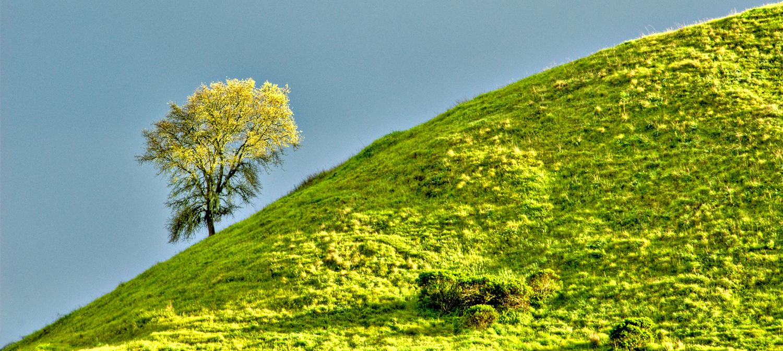lone-tree9x21©DonKellogg2010