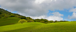 san-marin-hills-glowing-oak13x30©DonKellogg2017
