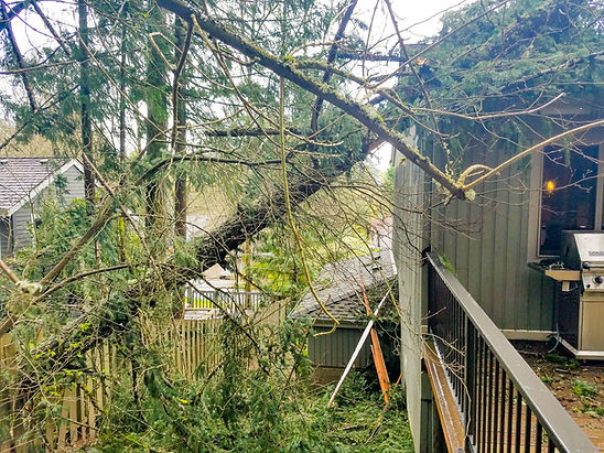 Tree falls on home after a big storm