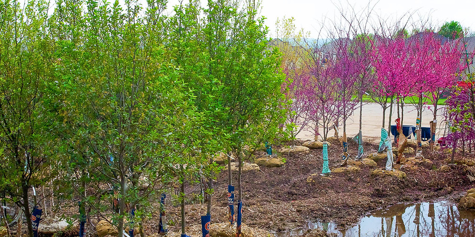 Tree Sale and Planting Consultation