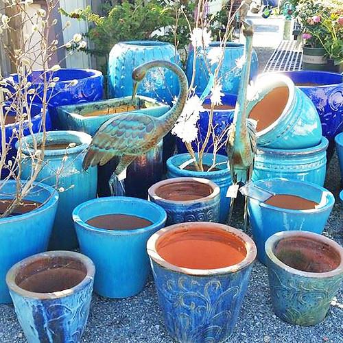 Blue-Pots.jpg