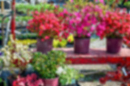 A variety of shrubs from our Garden Nursery