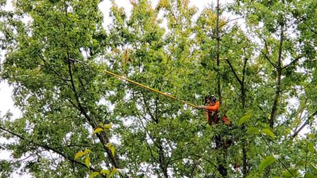 Tree & Shrub Pruning