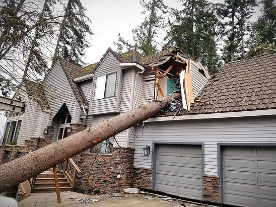 Failed tree on house_edited.jpg