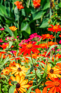 20160903-Annuals and Perennials (42 of 5