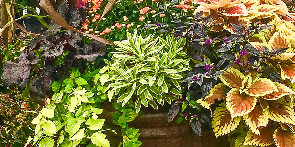 Bringing in Outdoor Plants for Next Year – or Not?
