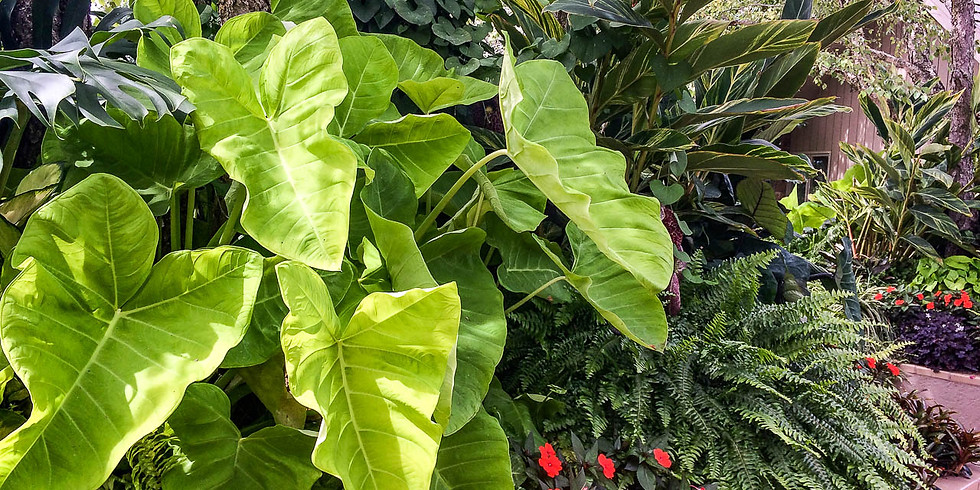 Indoor Plants and Tropicals Guided Greenhouse Tour