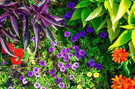 Helmi's Gardens offers many annuals and perennials