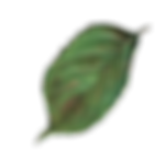leaf copy.png