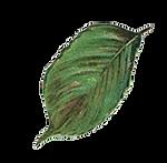 leaf copy.png