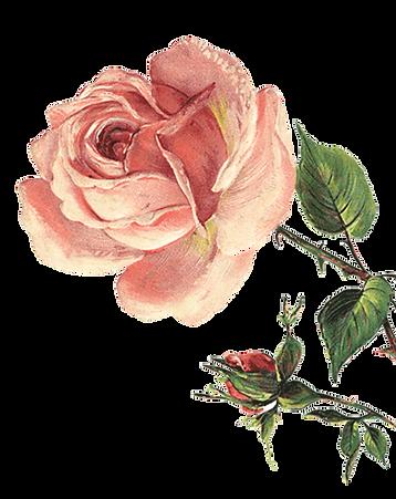 rose copy.png