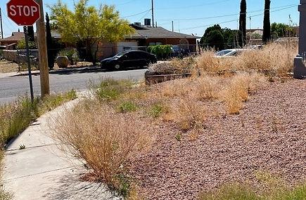 weeds-el-paso_edited.jpg
